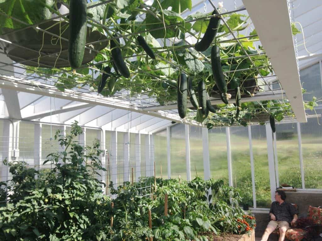 planted greenhouse