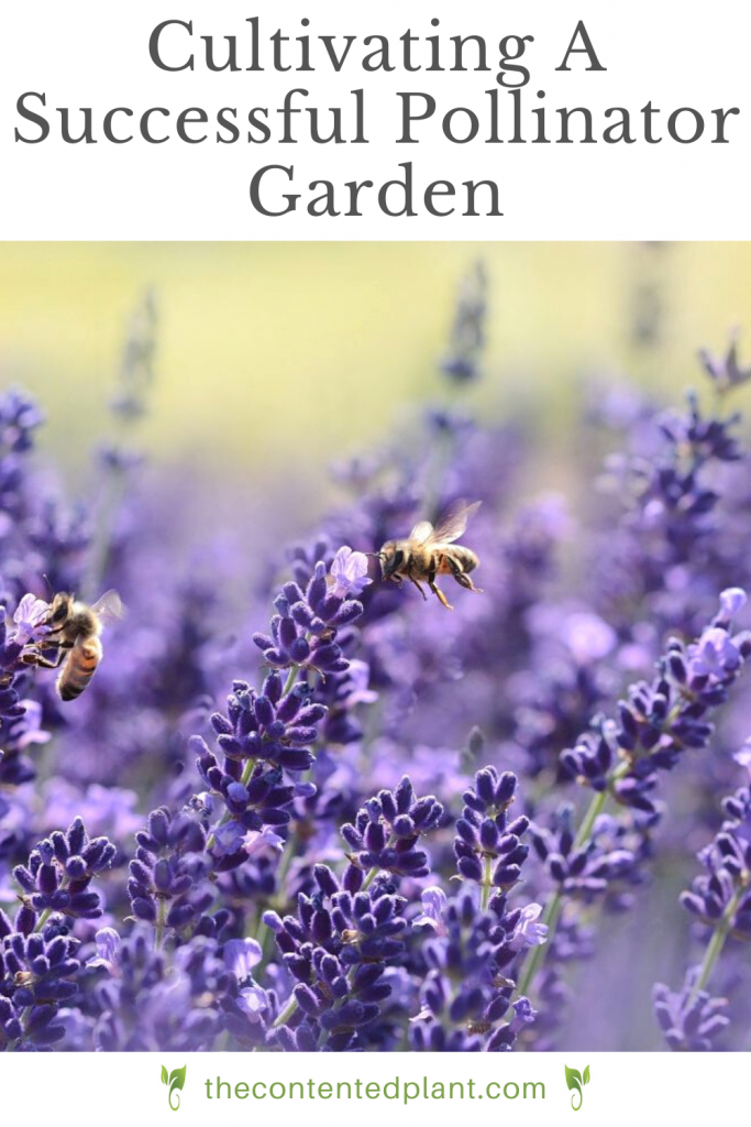 Cultivating a successful pollinator garden-pin image