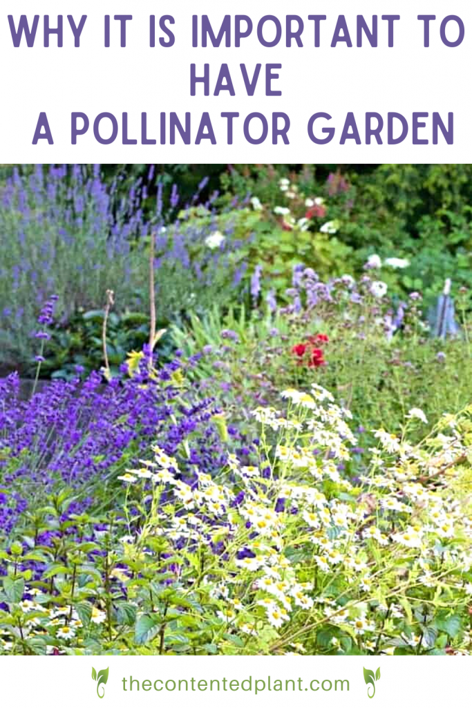 Why it is important to have a pollinator garden-pin image