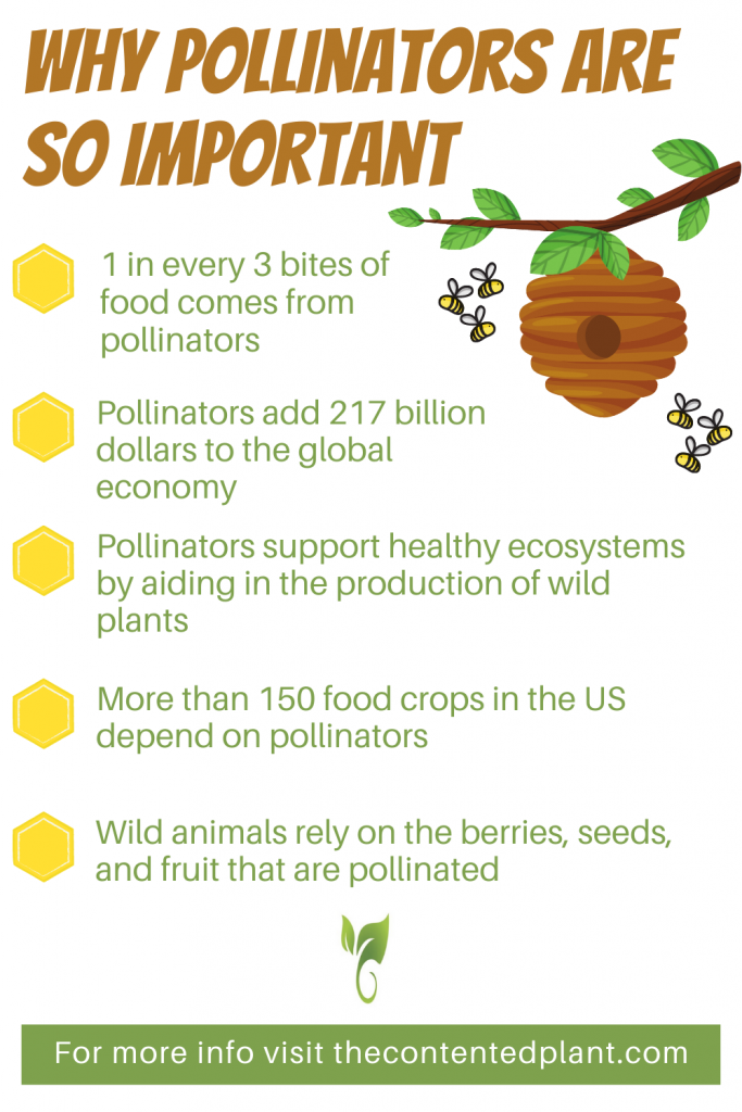 Why pollinators are so important info graph-pin image