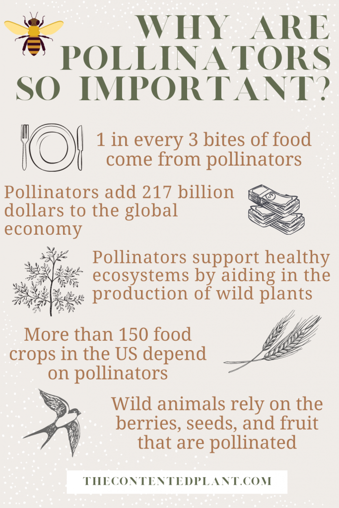 Why are pollinators so important info graph-pin image