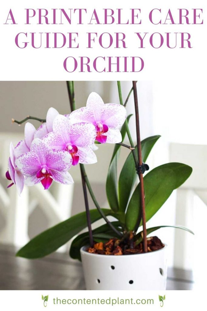 A printable care guide for your orchid-pin image