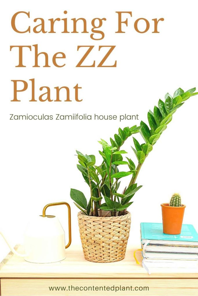 Caring for the ZZ plant-pin image