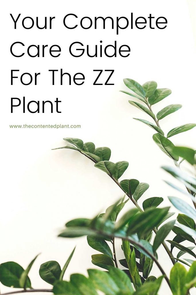 Your complete care guide for the zz plant-pin image