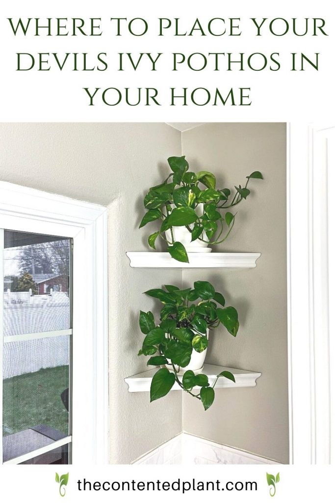 Where to place your devils ivy pothos in your home-pin image