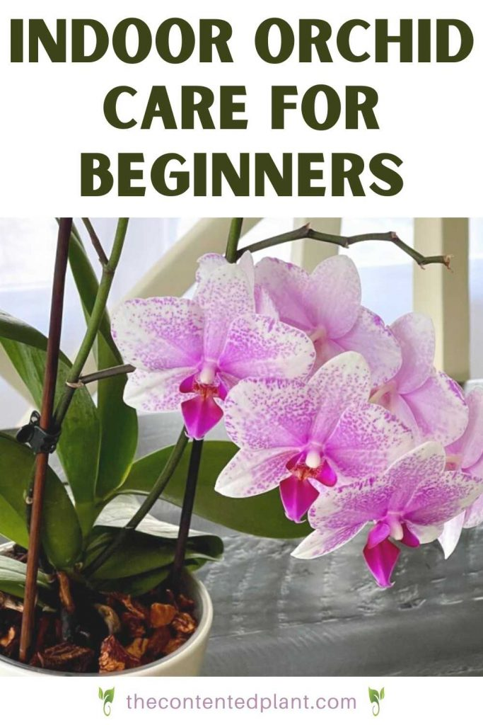 Indoor orchid care for beginners-pin image