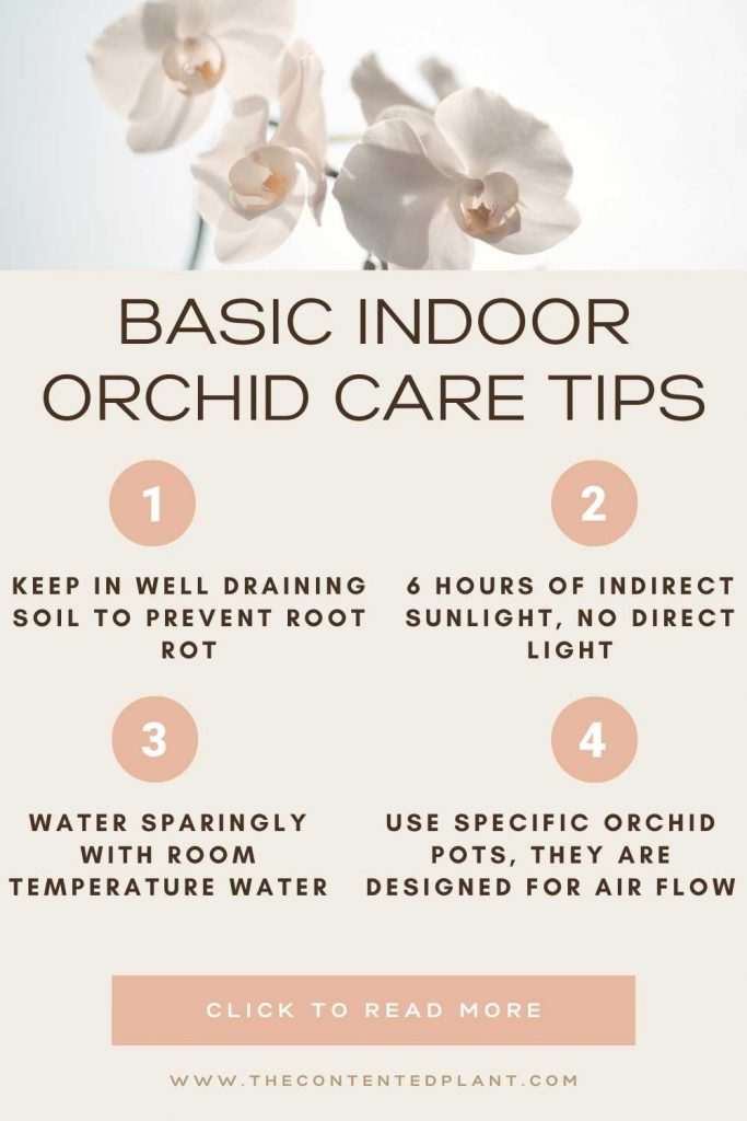 Basic indoor orchid care tips-info graph pin image