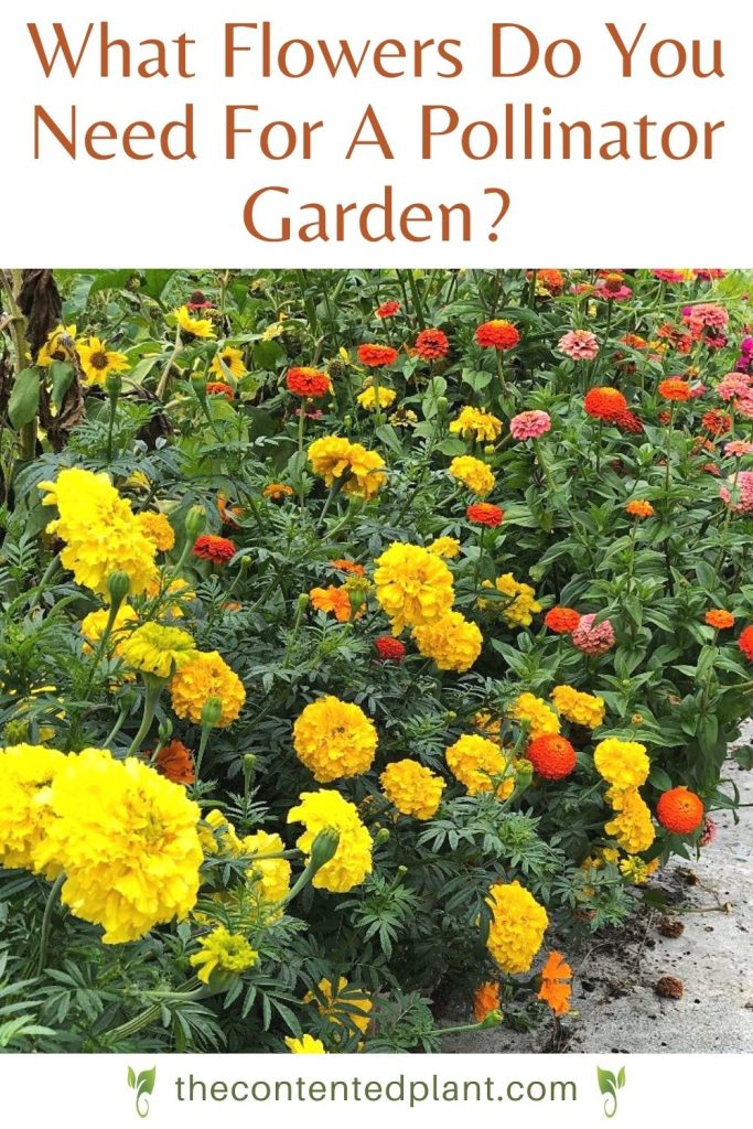 What flowers do you need for a pollinator garden?-pin image