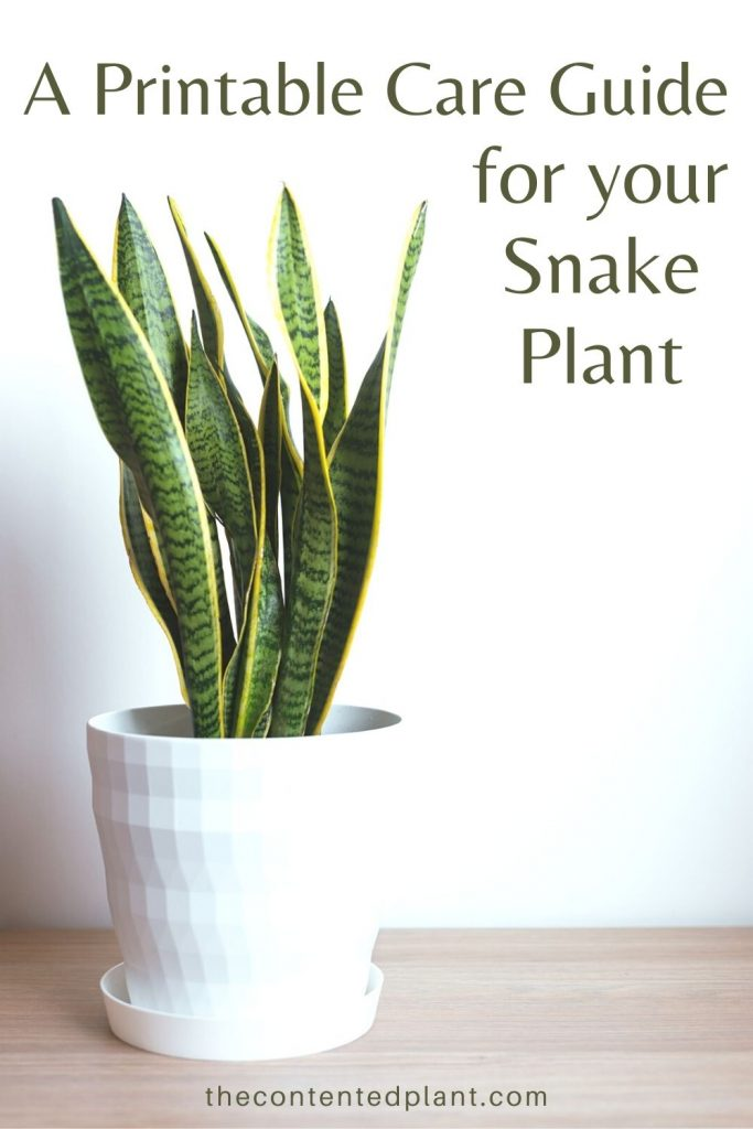 A printable care guide for you snake plant-pin image