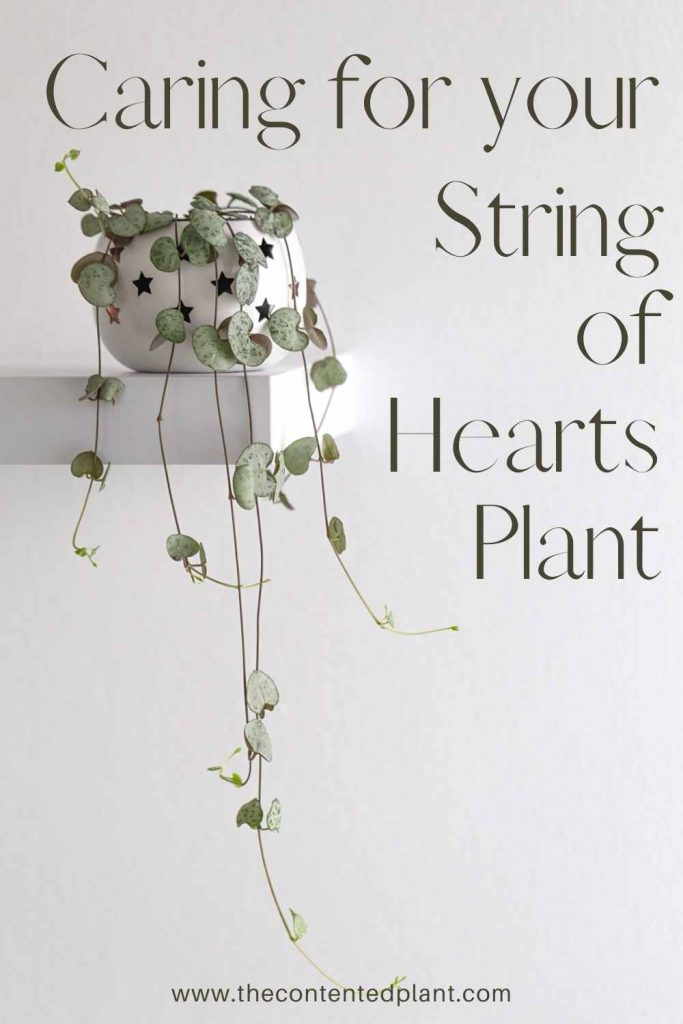 Caring for your string of hearts plant-pin image