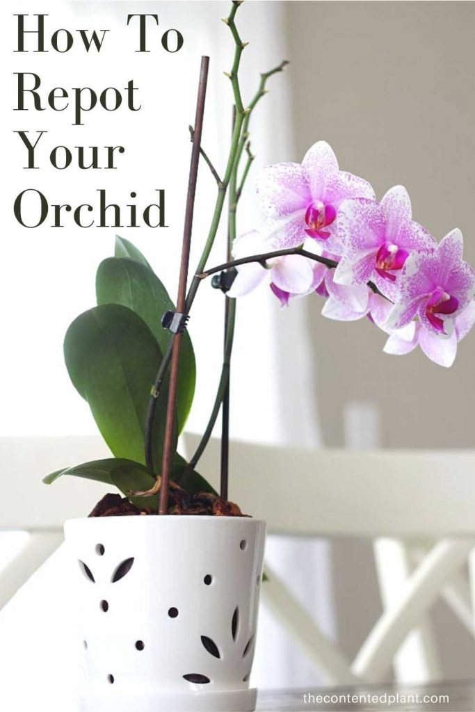 How to repot your orchid-pin image
