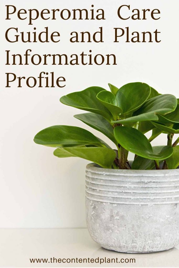 Peperomia care guide and plant information profile-pin image