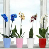 orchids in a group
