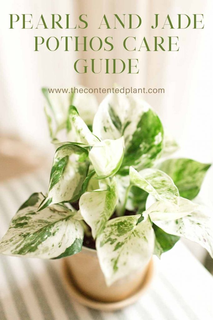 Pearls and jade pothos care guide-pin image
