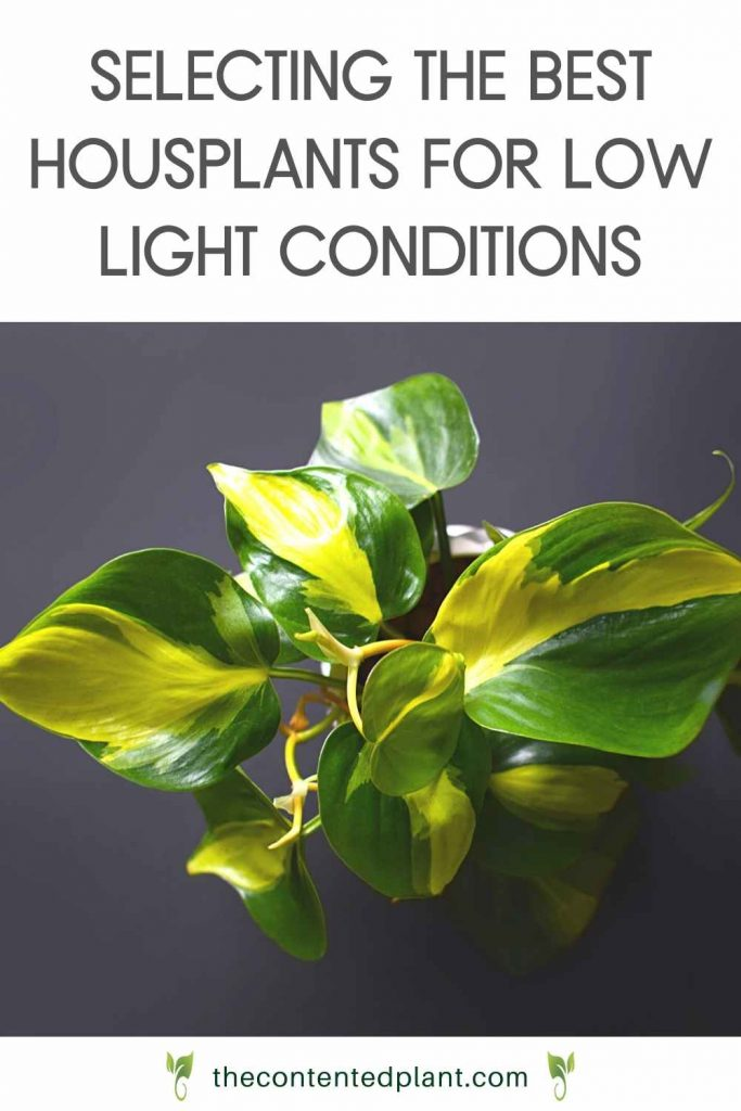 Selecting the best houseplants for low light conditions-pin image
