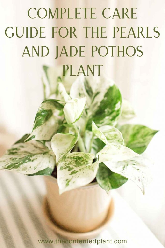 Complete care guide for the pearls and jade pothos plant-pin image