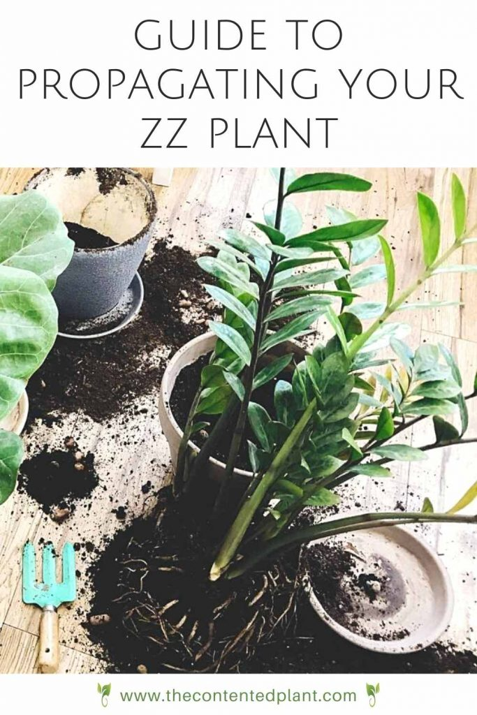 Guide to propagating the zz plant-pin image