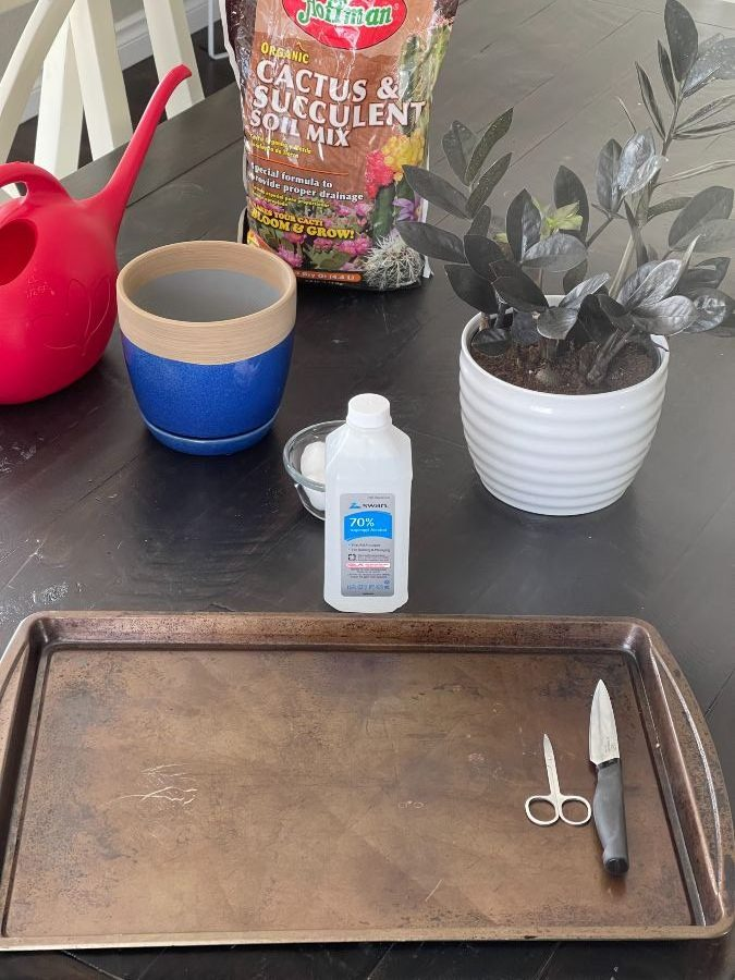 propagating zz plant-tools and materials
