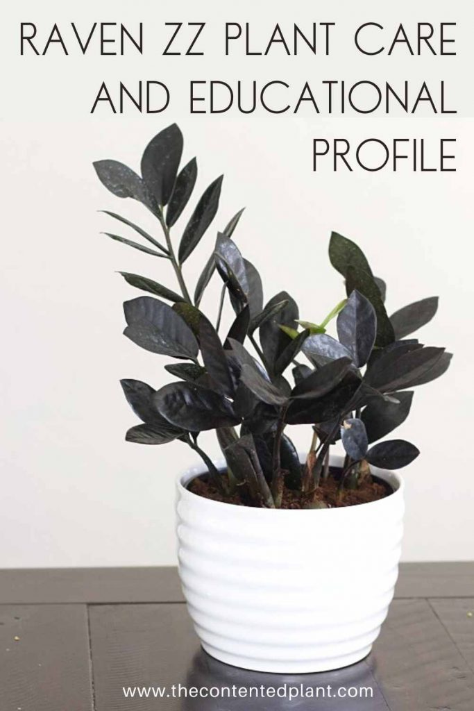Raven zz plant care and educational profile-pin image