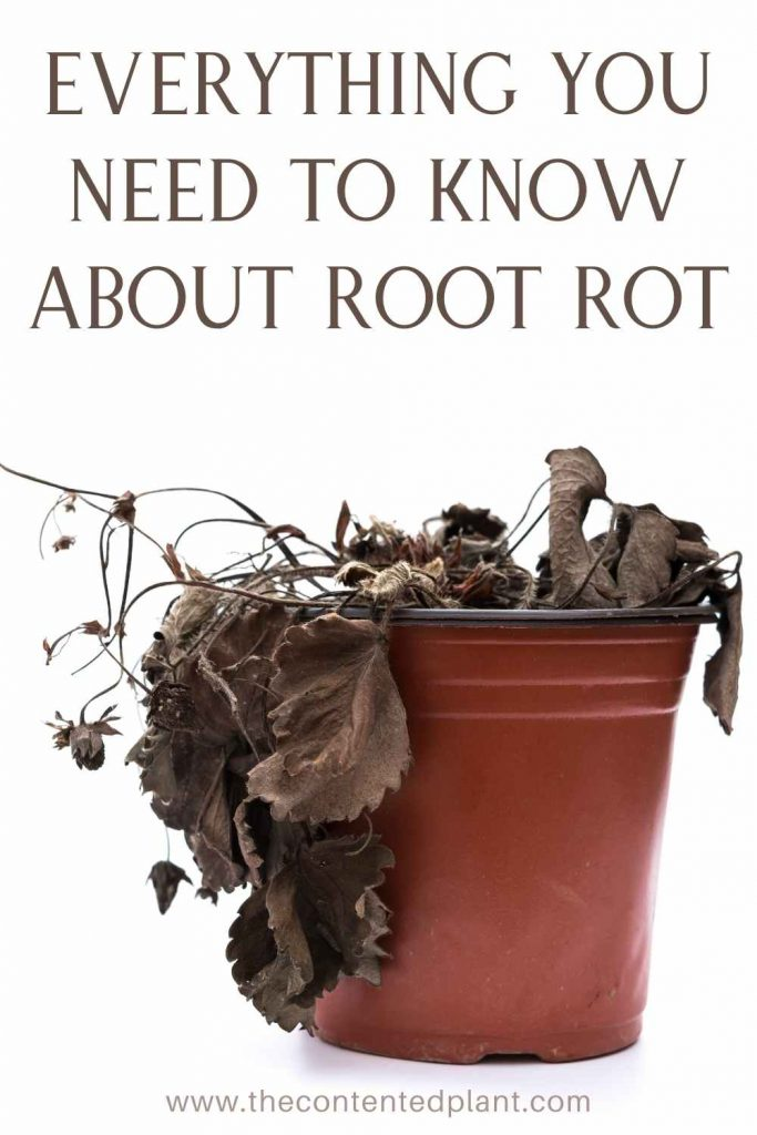 Everything you need to know about root rot-pin image