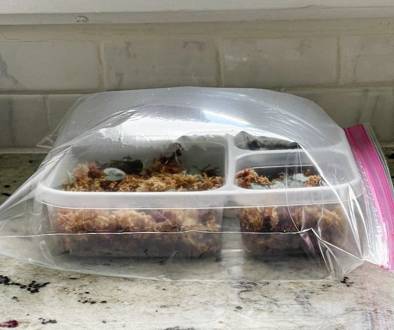 homemade greenhouse with a plastic bag sealed over a seedling tray