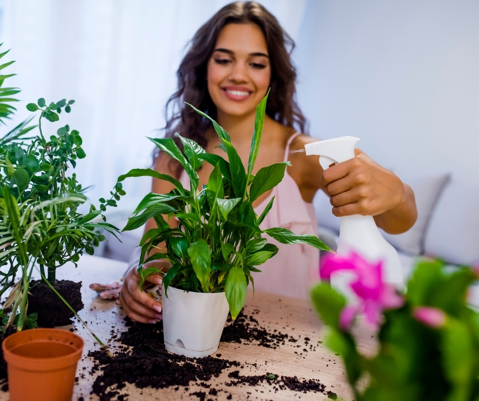 spritzing plant with neem oil