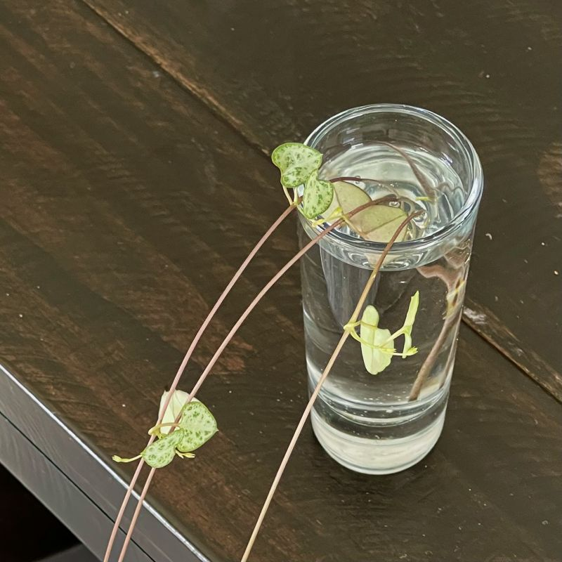 string of hearts-water propagation
