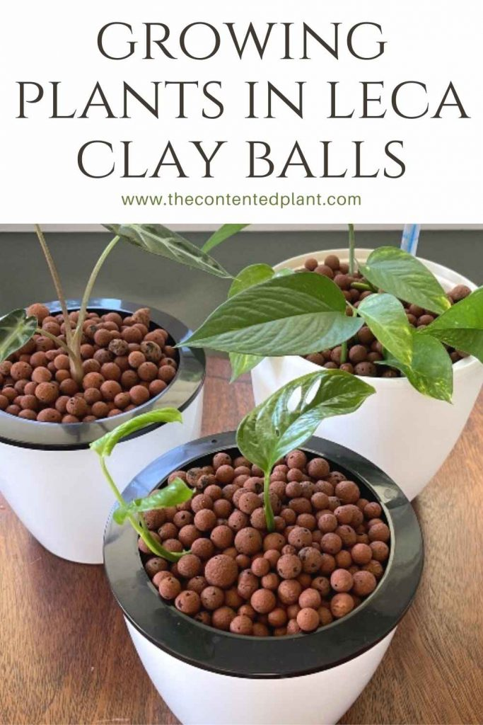 Growing plants in leca clay balls-pin image